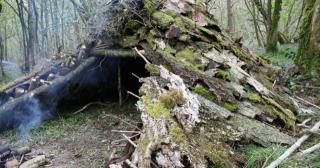 Bark shelter in the woods