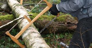 Using a hand made bucksaw