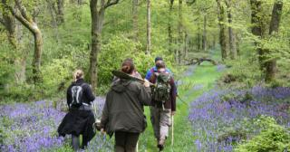 Foraging through the bluebell woods