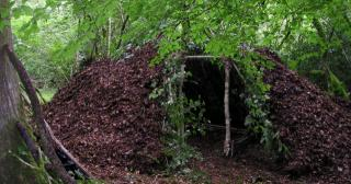 A long term group shelter thatched with leaf litter