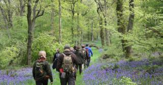 Foraging walk through the bluebell woods