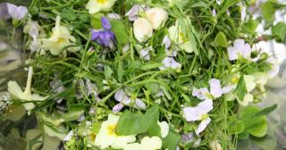 Edible foraged wild flowers